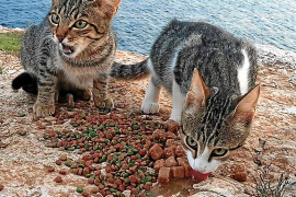 Acción Francisco denuncia el abandono de casi una decena de gatos en es Cap