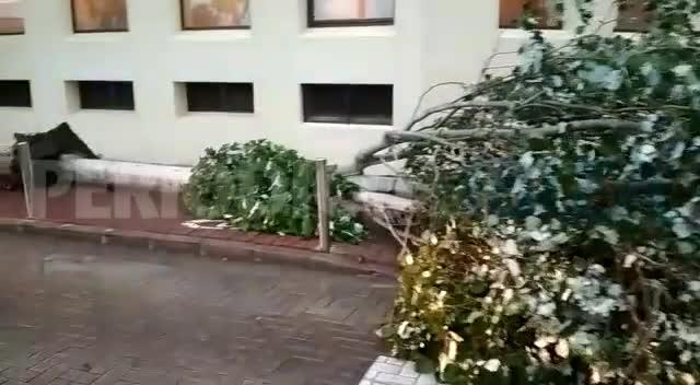 Cortan el tráfico en una calle de la ciudad de Ibiza por la caída de un árbol