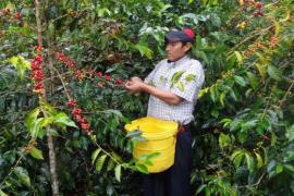 Crisis del Café podría aumentar la pobreza en América Latina