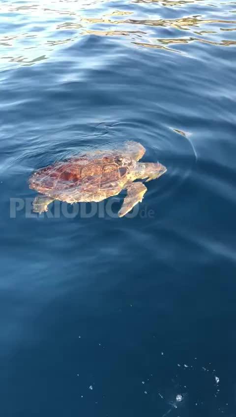 Avistada una tortuga marina en Cala Vedella