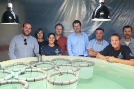 Las tortugas marinas nacidas en Ibiza se desarrollan con normalidad