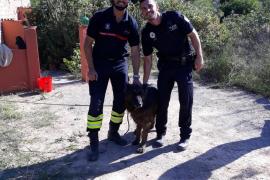 Bomberos y Policía Local de Sant Josep rescatan a un perro atrapado en un 'safareig'