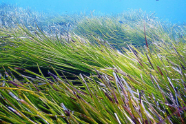 El Mar Balear sólo está cartografiado en un 22 % hasta 700 metros de profundidad