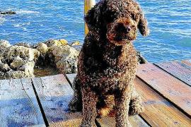 Muere Marley, el perro que buscó a Diana Quer y a Gabriel Cruz