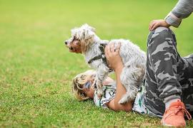 «Más de la mitad de los abandonos de perros son por la falta de vivienda»