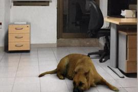 El filtro del perro de Instagram que causa broncas familiares