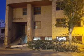 Nueva caída de un gran árbol en Isidor Macabich