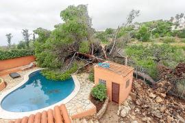 Damnificados por el tornado y miles de árboles, a la espera de ayudas