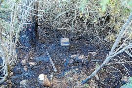 Una quema descontrolada en un día de alerta calcina 1.000 m² de pinada en Corona