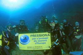 La población de tiburones y rayas en el Mar Balear se ha reducido un 90 %