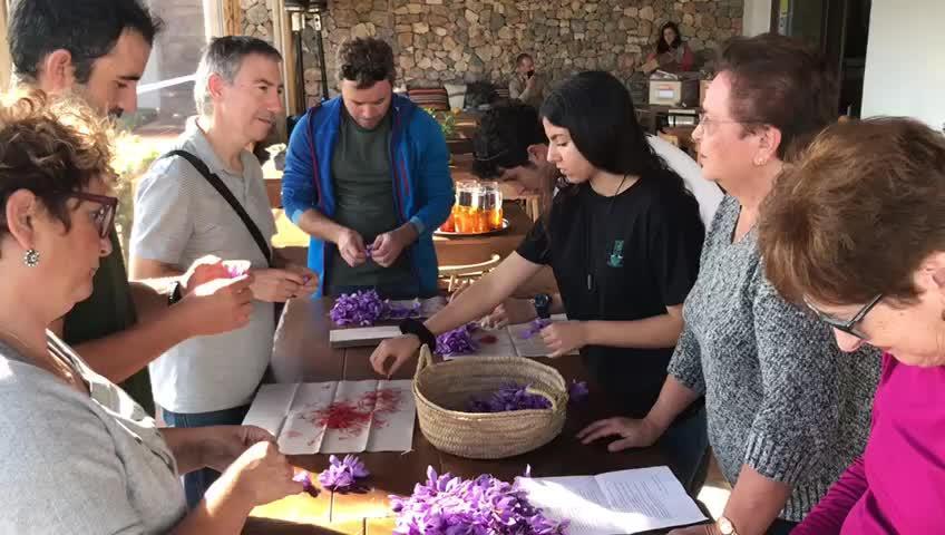 Un taller enseña a cosechar azafrán e introducirlo en platos típicos ibicencos