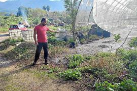 Vertido de aguas fecales en huertos de Sóller