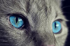 Cómo salvar a un gato atrapado en el capó de un coche