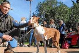 Una mujer correrá por cuenta propia con los gastos de manutención de los podencos de Can Dog