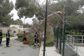 La Policía y los Bomberos retiran un árbol y fijan un cartel a causa del fuerte viento