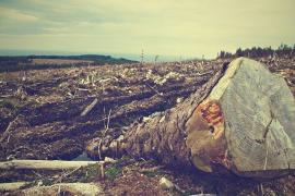 La deforestación en el Amazonas ha crecido un 103 %
