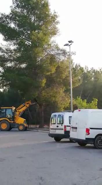 Accidentada tala de un árbol en la ITV de Ibiza