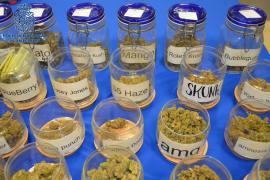 Detenido el responsable de una asociación cannábica por venta de varias drogas