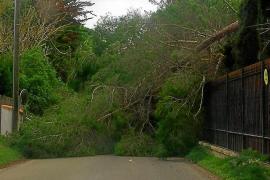 Rachas de más de 80 km/h causan pequeños incidentes y el cierre dos horas de la Savina