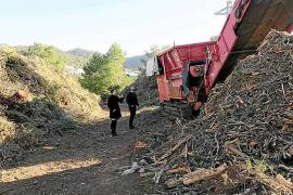 Comienza a funcionar en Sant Antoni una astilladora para triturar restos de árboles