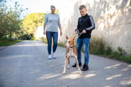 Los paseos con los perros de sa Coma, en imágenes (Fotos: Toni P.).