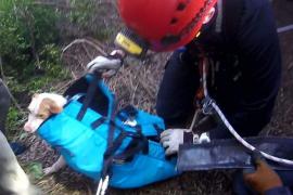 Bomberos de Ibiza rescatan a un perro que se había caído en un pozo de Sant Antoni