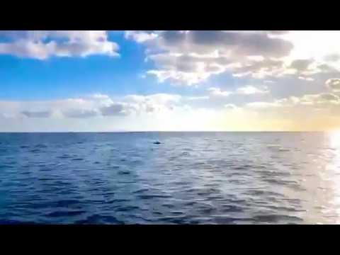 Un grupo de delfines navega por las aguas de Santa Eulària