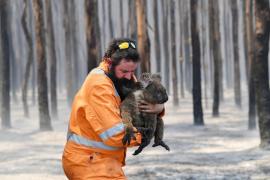 Incendios en Australia: 1.000 millones de animales muertos