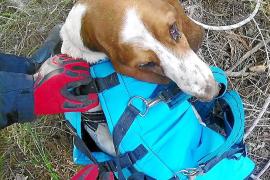 Los bomberos rescatan a un perro en Sant Antoni