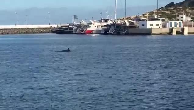 Delfines en el puerto de Ibiza