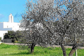 Rock, gastronomía y tradiciones en las fiestas patronales de Santa Agnès