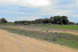 El Consell de Formentera desestima el parque solar fotovoltaico de la Mola
