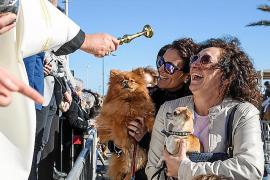 Sant Antoni, patrón de los perros