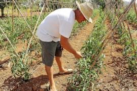 Los agricultores ecológicos buscan tierras para cultivar con el antiguo sistema de 'majorals'