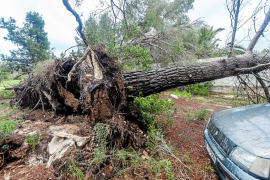 La borrasca 'Gloria' deja árboles caídos, falta de suministro eléctrico y fuertes lluvias en las Pitiusas