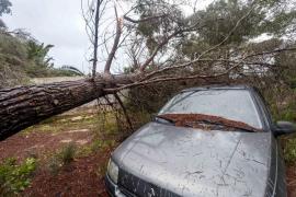 Baleares pide la declaración de emergencia para las zonas dañadas por 'Gloria'