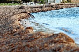 Los vecinos de Talamanca, contra el estado de abandono de la playa